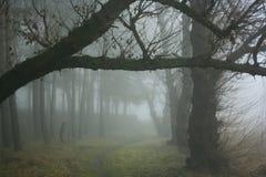 Bos in de mist Stock Fotografie