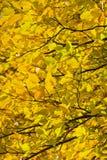 Bos in de mooie de herfstkleuren op een zonnige dag Stock Foto