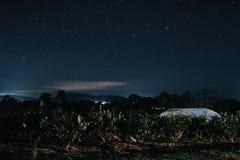 Bos in de nacht en de ster in de hemel stock afbeelding