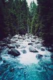 Bos de rivierstromen van de pijnboomboom door de rotsen Mooie powerf Stock Afbeelding