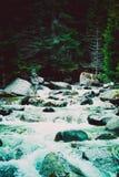 Bos de rivierstromen van de pijnboomboom door de rotsen Mooie powerf Royalty-vrije Stock Foto's