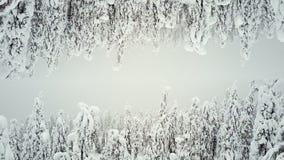 Bos in de sneeuw als 2 werelden Het schermspaarder FINLAND voor titels stock video