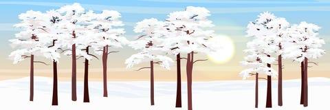 Bos in de sneeuw Pijnbomen en open plek royalty-vrije illustratie