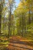 Bos in de vroege herfst royalty-vrije stock afbeeldingen