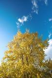 Bos in de vroege herfst royalty-vrije stock fotografie