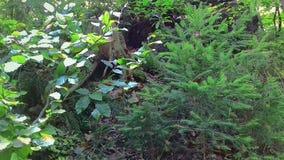 Bos in de vroege herfst in de stad van Rumia royalty-vrije stock fotografie