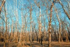 Bos in de vroege lente Stock Foto's