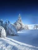 Bos in de winter royalty-vrije stock foto