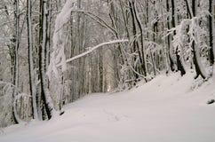 Bos in de winter royalty-vrije stock fotografie