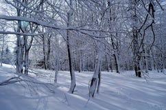 Bos in de winter royalty-vrije stock afbeelding