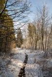 Bos in de winter Royalty-vrije Stock Afbeeldingen