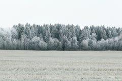 Bos in de winter Stock Fotografie
