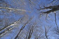 Bos in de winter Stock Foto