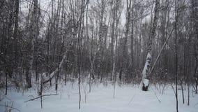 Bos in de winter Heel wat sneeuw In de voorgrondbomen zonder gebladerte in de sneeuw stock videobeelden