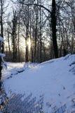 Bos in de winter royalty-vrije stock foto's