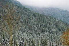 Bos de winterscènes Stock Afbeelding