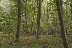 Bos in de zomer Royalty-vrije Stock Afbeeldingen