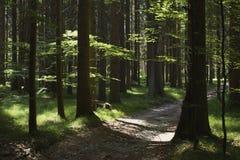 Bos in de zomer Royalty-vrije Stock Foto