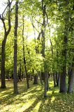 Bos in de zomer Stock Afbeelding