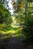 Bos in de zonnige de zomerdag Stock Foto's
