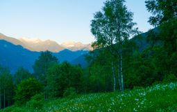 Bos in de Zwitserse bergen Stock Afbeelding