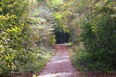 Bos del amsterdamse del camino forestal Foto de archivo