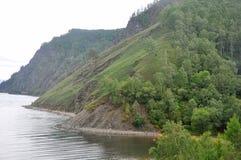 Bos dichtbij Baikal Royalty-vrije Stock Foto's