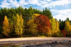 Bos dichtbij de stroom van Igor royalty-vrije stock afbeelding