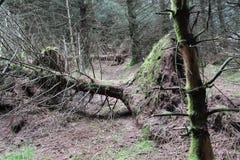 Bos dichtbij lennoxtown Stock Foto's