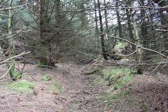 Bos dichtbij lennoxtown Stock Afbeeldingen
