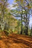 Bos dichtbij Plitivce het park van merennationa, Kroatië stock fotografie