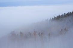 Bos in dichte mist Stock Afbeelding