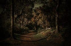 Bos donkere somber en eng stock fotografie