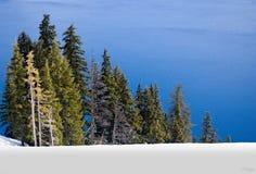 Bos door oever van het meer in de winter Stock Fotografie
