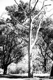 Bos in droog klimaat stock afbeeldingen