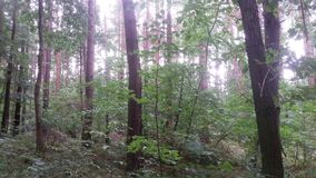 Bos in Duitsland royalty-vrije stock foto