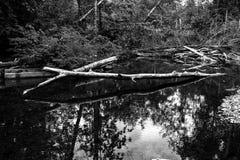 Bos in een rivier wordt weerspiegeld die Stock Foto's