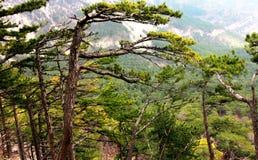 Bos en bergen van de Krim Stock Foto