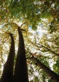 Bos en Bomen Stock Afbeeldingen