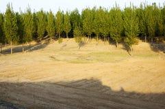 Bos en gebied Royalty-vrije Stock Foto