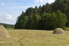 Bos en gebied Stock Afbeelding