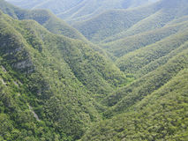 Bos en heuvels in Australië Stock Fotografie