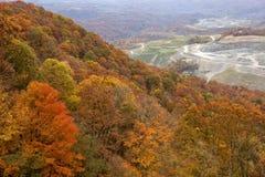 Bos en kolenmijn Appalachia royalty-vrije stock foto's