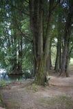 Bos en Meerscène Stock Afbeeldingen