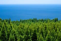 Bos en overzees stock foto