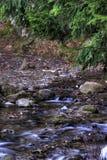 Bos en rivier Stock Foto