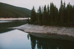 Bos en rivier Stock Afbeeldingen