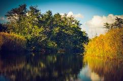 Bos en rivier Royalty-vrije Stock Afbeelding