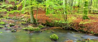 Bos en rivier in de lente stock afbeelding