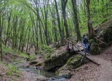 Bos en rivier in een schilderachtige kloof in de lente Royalty-vrije Stock Foto's